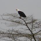 2012-12-26--22 Uganda
