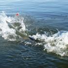 2013-08-23-28-Trinity-River-1,74m