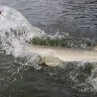2013-08-27--33 Trinity River (2,16m)