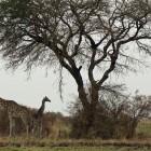 2013-12-31-47-Uganda