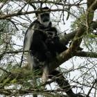 2014-01-01--15 Uganda
