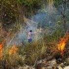 2014-03-24-9-Indien (Bushfire agaist a Leopard)