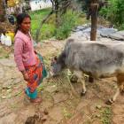 2014-03-27--66 Indien