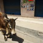 2014-03-28-42-Indien