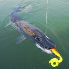 2014-07-22-39-Kanada-1,10m (Blind Pike)
