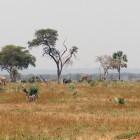 2016-01-29-69-Uganda