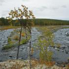 2016-08-25--7 Sibirien